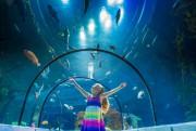 L'accès à l'Aquarium de Québec sera gratuit pourles... (PHOTO FOURNIE PAR L'AQUARIUM DE QUÉBEC) - image 2.0