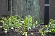 Vous avez un espace vert accessible de votre... (Mélissa Bradette) - image 1.0