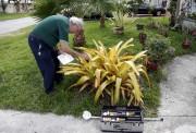 En Floride, plusieurs tests sont menés pour détecter... (AP, Lynne Sladky) - image 3.0