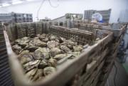 Visite de l'usine d'huîtres à Rasperry Point... (La Presse, Ivanoh Demers) - image 3.0