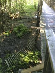 Encore une fois, la passerelle du parc écologique... (Courtoisie) - image 1.0