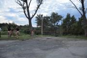 Une douzaine d'arbres ont été déracinés par le... (Photo Le Quotidien, Katerine Belley-Murray) - image 4.0