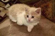 Toby, adopté à la SPCA Saguenay. - Stephan... (Photo courtoisie) - image 1.1