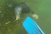 «Je ne suis pas gêné de dire que le parc marin... (PHOTO DAVID BOILY, LA PRESSE) - image 2.0