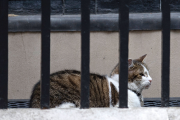 Larry le chat arpente le 10 Downing Street depuis... (Photo Oli Scarff, AFP) - image 5.0