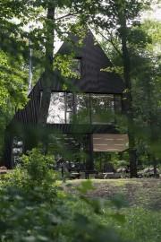 Blottie dans l'intimité d'une forêt de pruches des... (Maxime Brouillet) - image 1.0