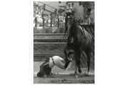 Une image forte des compétitions équestres des Jeux... (Archives La Voix de l'Est) - image 2.0