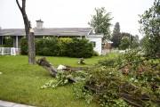 Les vents violents ont fait tomber plusieurs arbres... (Photo Le Quotidien, Jeannot Lévesque) - image 1.0