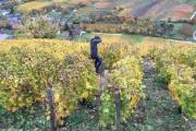 Visite du vignoble de François Cotat à Chavignol,... (Photo fournie par Jean Benoît Hinse) - image 3.0