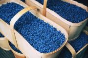 Les bleuets occupent le haut du pavé et... (Photo courtoisie) - image 1.0