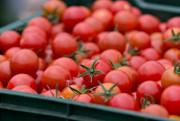 Lorsqu'ils ont commencé à cultiver leur terre, il y... (La Presse, Olivier Jean) - image 2.0