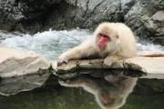 Les macaques japonais du parc Jigokudani mènent la... (La Tribune, Jonathan Custeau) - image 2.0