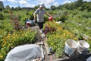 Le Jardin Tourne-Sol, où s'affaire Claire Picard, est... (Le Soleil, Yan Doublet) - image 2.0