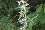 Les orchidées sont parmi les plantes les plus fascinantes, tant par leurs... - image 1.0