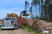 Le secteur du bois d'oeuvre a dégagé un... (Archives Le Quotidien, Louis Potvin) - image 1.0