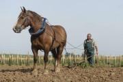 Le labour se fait avec un cheval.... (PHOTO AFP) - image 2.0