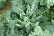 Les légumes produits par Les potagers des nues... (fournie) - image 2.0