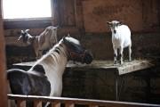 La ferme Reid... (PHOTO ANDRÉ PICHETTE, LA PRESSE) - image 4.0