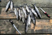 La préparation des poissons est un art que... (Photo François Roy, La Presse) - image 2.0