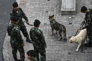 Des soldats thaïs et des chiens policiers inspectent... (AFP) - image 3.0