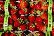 Habitués aux fraises blanches, les Californiens trouvent que... (Le Soleil, Caroline Grégoire) - image 2.0