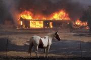 Une maison brûle à Lower Lake en Californie.... (AP) - image 4.0