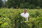 Daniel L'Heureux, copropriétaire du vignoble La Grenouille... (PHOTO HUGO-SéBASTIEN AUBERT, LA PRESSE) - image 2.0