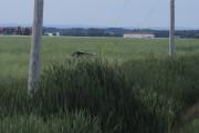 Le véhicule s'est retrouvé plusieurs dizaines de mètres... (Photo Le Quotidien, Gimmy Desbiens) - image 2.0