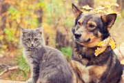 46575228 - dog and cat best friends sitting... - image 2.0