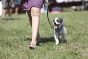 Une centaine d'amoureux des chiens ont convergé vers... (Julie Catudal, La Voix de l'Est) - image 2.0