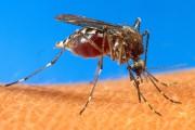 Les moustiques sont les vecteurs du virus du... (Archives AP) - image 5.0