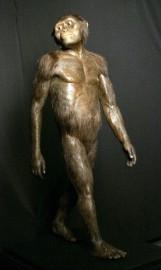 Lucy, la plus célèbre des australopithèques, vivait en... (AP, Pat Sullivan) - image 2.0