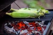 La saison du maïs bat son plein au... (PHOTO OLIVIER JEAN, LA PRESSE) - image 5.0