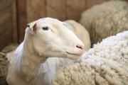 La zone des animaux de la ferme était... (Julie Catudal, La Voix de l'Est) - image 2.0