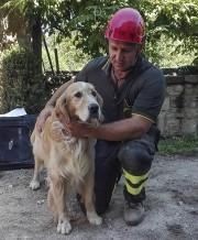Romeo, un golden retriever, avait été retrouvé la... (AP) - image 2.0