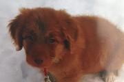 À deux mois, Victor était déjà un petit... (Photo courtoisie) - image 1.0