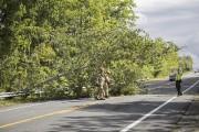 Un arbre s'est affaissé sur la route 139... (Julie Catudal, La Voix de l'Est) - image 1.1