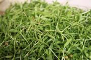 Les micropousses, savoureuses et vitaminées, donneront du croquant... - image 1.1