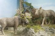 Panaches: caribous et autres cervidés du Canada est... (Photo Le Progrès-Dimanche, Michel Tremblay) - image 2.1