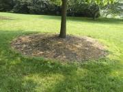 Un cercle de paillis autour d'un arbre lui... (www.jardinierparesseux.com) - image 13.0