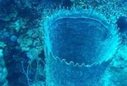 La plongée au Belize donne l'occasion d'admirer la... (Photo Evelyne Audet, La Presse) - image 2.0