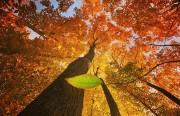 Depuis trois ans, chaque automne apporte au Projet... (@sxs.clough) - image 1.0