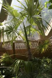 Les épines acérées du palmier zombie sont carrément... (www.jardinierparesseux.com) - image 9.0