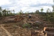 Photos pour reportage en Mauricie sur la foresterie... (Archives La Presse) - image 1.0