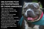 Gatineau aurait bien voulu bannir les chiens de type pitbull de son territoire,... - image 2.0