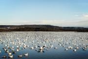 L'étang Burbank, à Danville, a une superficie de... (Photo Bernard Brault, La Presse) - image 3.0