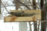 mangeoires d 39 oiseaux de la visite tout l 39 hiver pierre gingras cour et jardin. Black Bedroom Furniture Sets. Home Design Ideas
