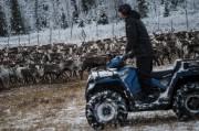Les éleveurs en quad ou motoneige préparent la... (AFP, Jonathan Nackstrand) - image 2.0