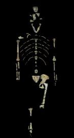 Les restes de Lucy sont préservés à l'université... (REUTERS) - image 2.0