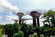 Ces grands arbres futuristes captent l'énergie solaire ainsi... (Photo Audrey Ruel-Manseau, La Presse) - image 2.0
